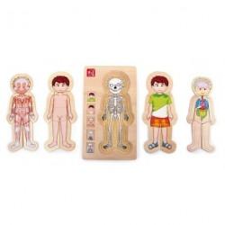 Anatomie hrou – kluk